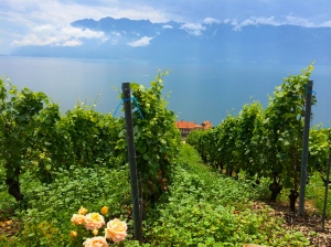 Swiss Vineyard