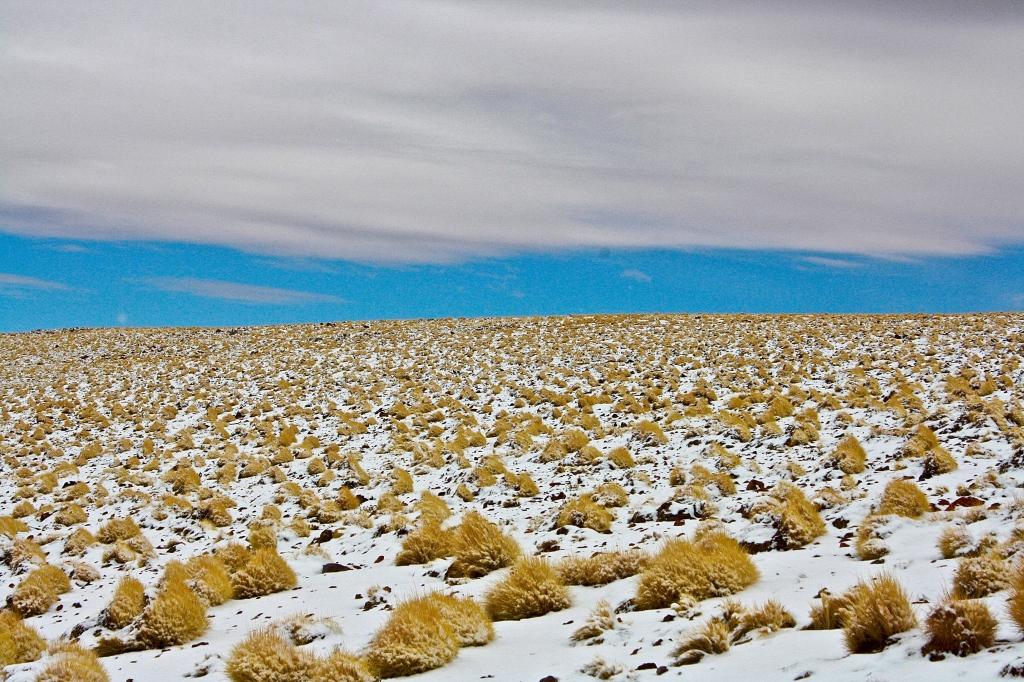The landscape surrounding the Chilean Lagunas (lakes) or Lagunas Altiplanicas located in this region