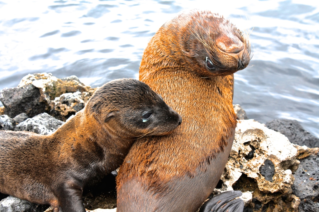 Galapagos ecuador sea lions