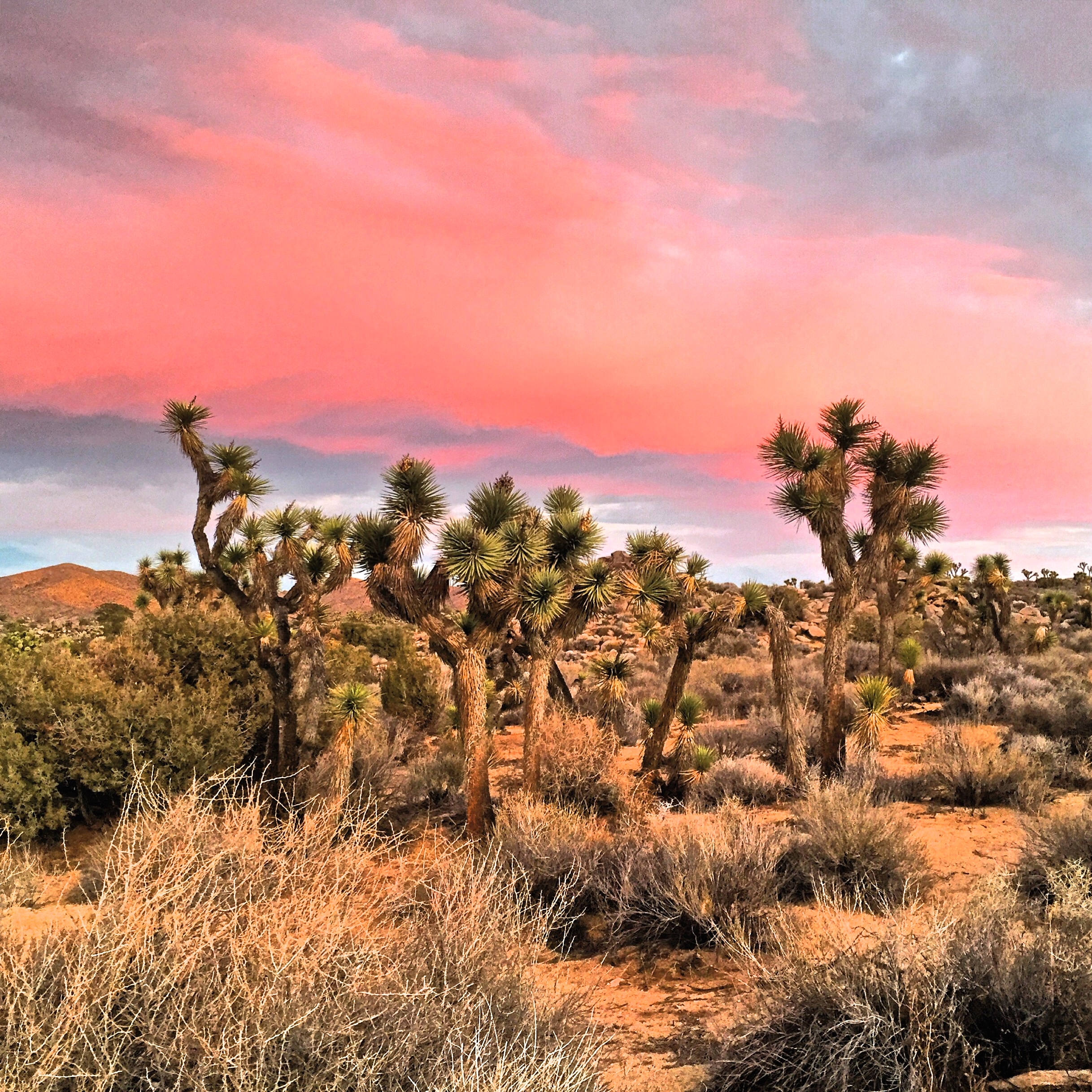 Joshua Tree National Park, California - VacayHack